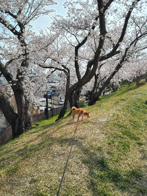 f:id:shibainumugi:20190407125422j:image