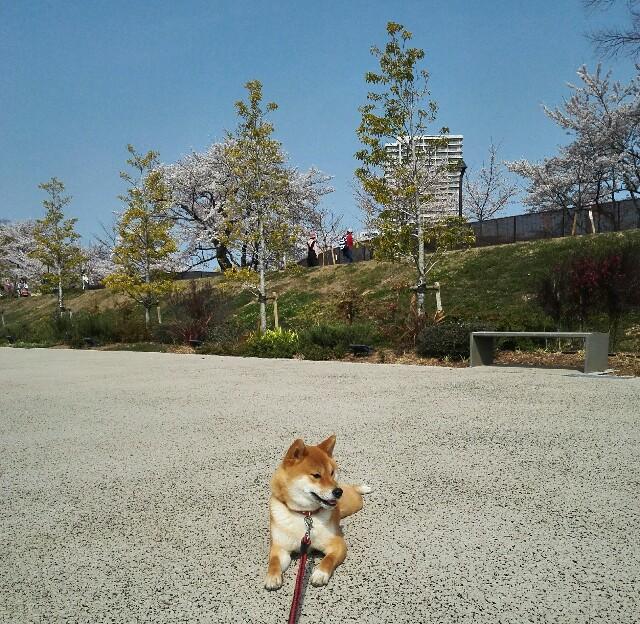 f:id:shibainumugi:20190407130107j:image