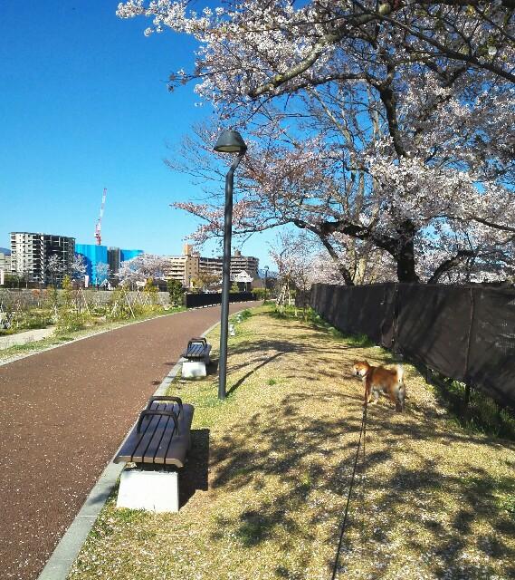 f:id:shibainumugi:20190413145547j:image