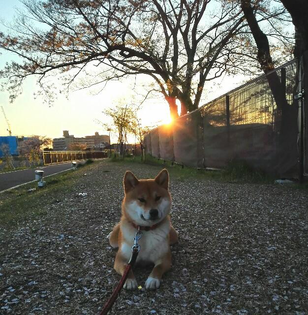 f:id:shibainumugi:20190415231711j:image