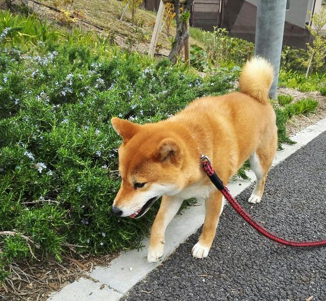 f:id:shibainumugi:20190420005843j:image