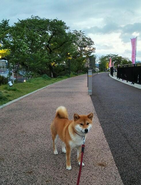 f:id:shibainumugi:20190427010907j:image