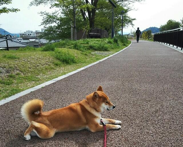 f:id:shibainumugi:20190428093607j:image