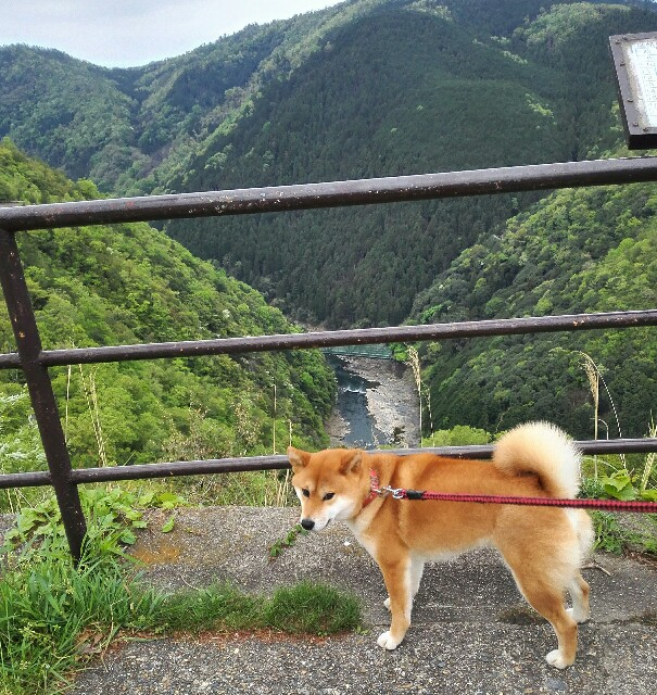 f:id:shibainumugi:20190501093338j:image