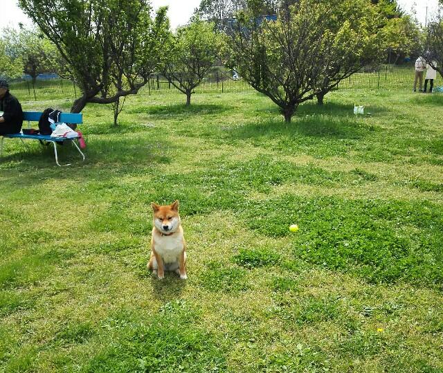 f:id:shibainumugi:20190504155050j:image