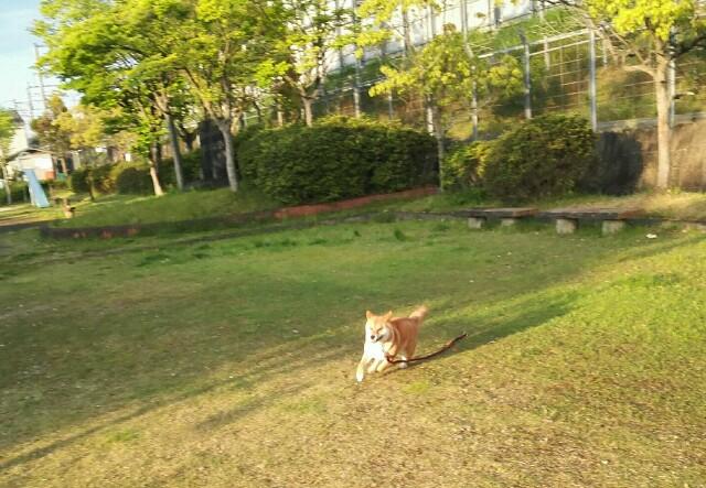 f:id:shibainumugi:20190506114614j:image