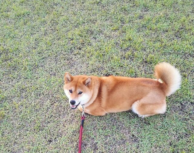 f:id:shibainumugi:20190526230811j:image