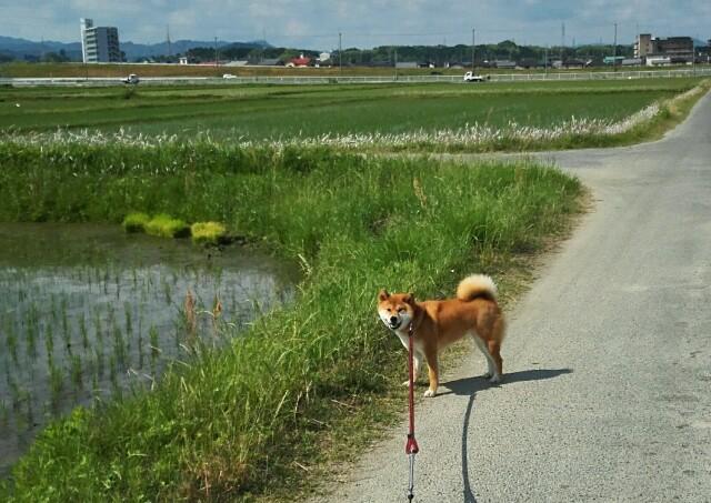 f:id:shibainumugi:20190601222336j:image