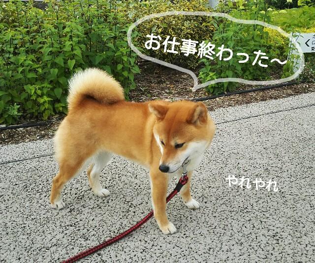 f:id:shibainumugi:20190609111429j:image