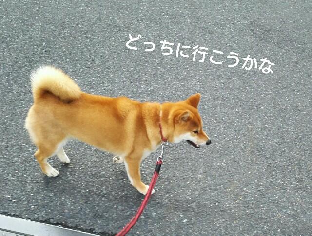 f:id:shibainumugi:20190613074955j:image