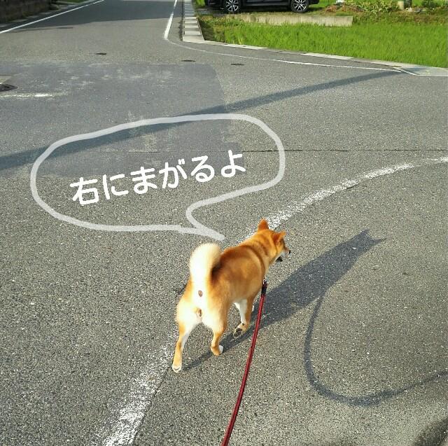 f:id:shibainumugi:20190613115042j:image