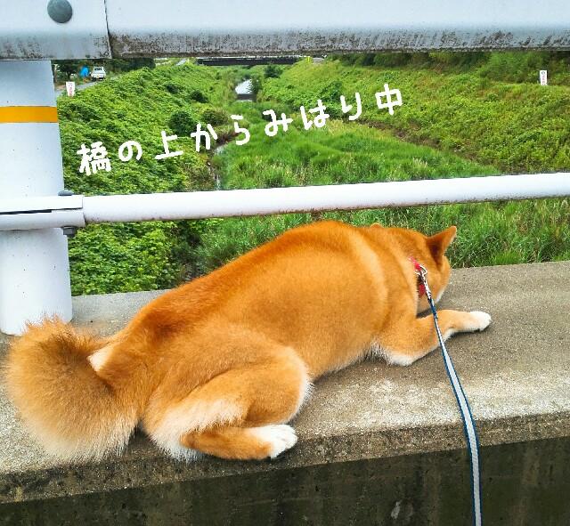 f:id:shibainumugi:20190701230252j:image