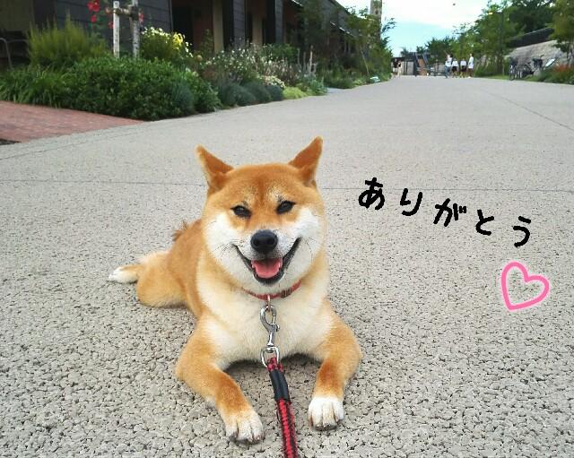 f:id:shibainumugi:20190710211129j:image
