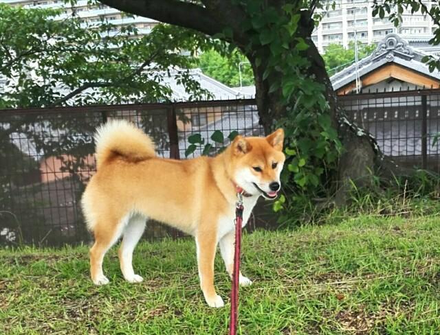 f:id:shibainumugi:20190716140244j:image