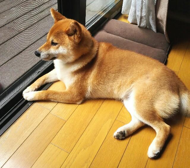 f:id:shibainumugi:20190721081825j:image