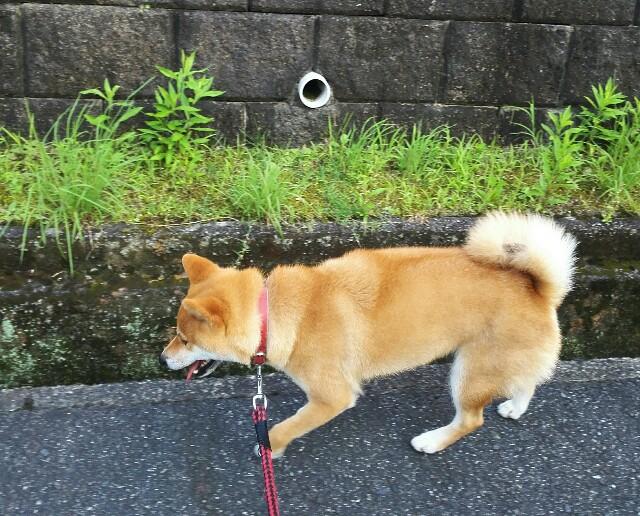 f:id:shibainumugi:20190725190836j:image