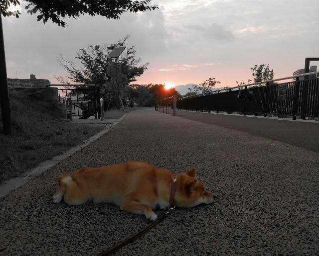 f:id:shibainumugi:20190730105117j:image