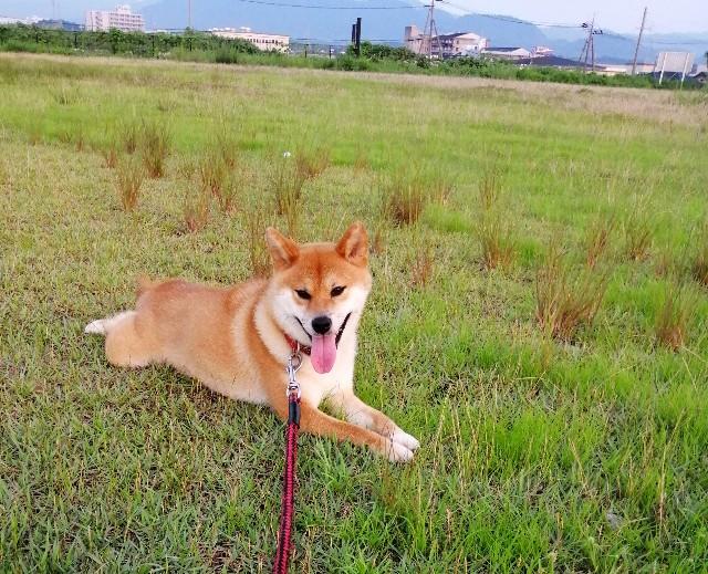 f:id:shibainumugi:20190802074705j:image