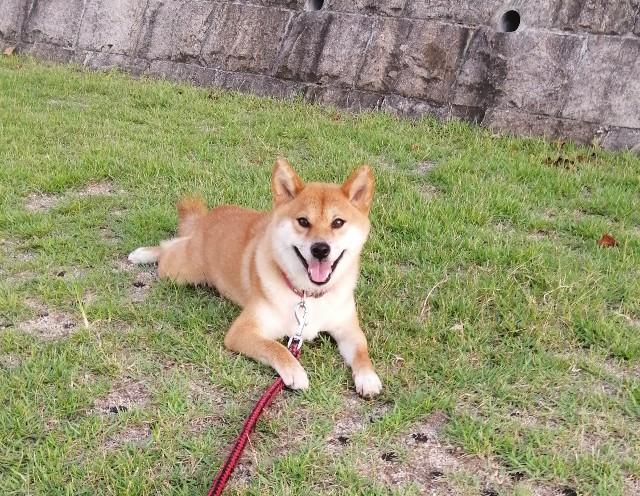 f:id:shibainumugi:20190805225944j:image