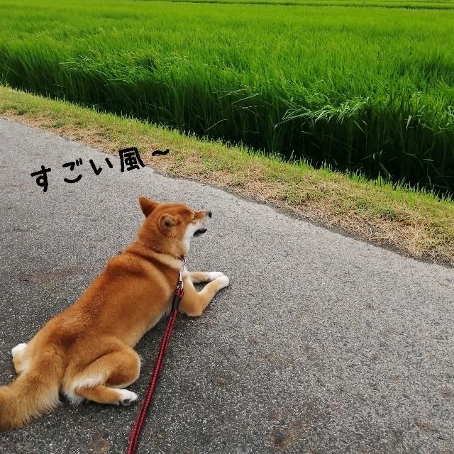 f:id:shibainumugi:20190815160459j:image