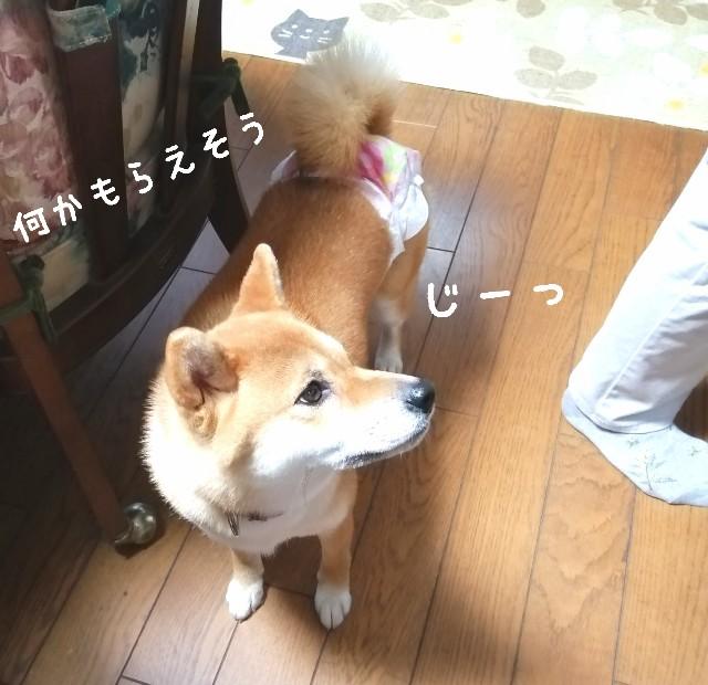 f:id:shibainumugi:20190815161420j:image