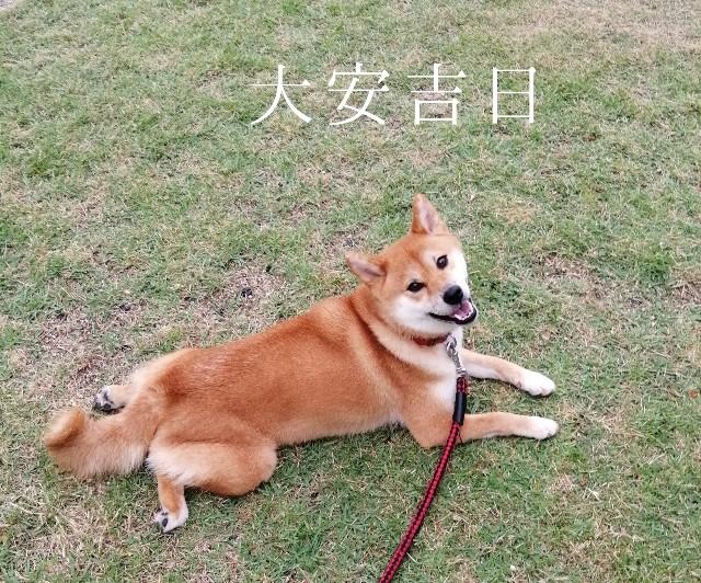 f:id:shibainumugi:20190829215127j:image
