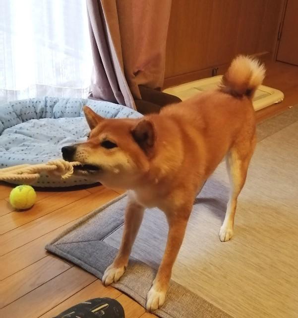 f:id:shibainumugi:20190916231930j:image