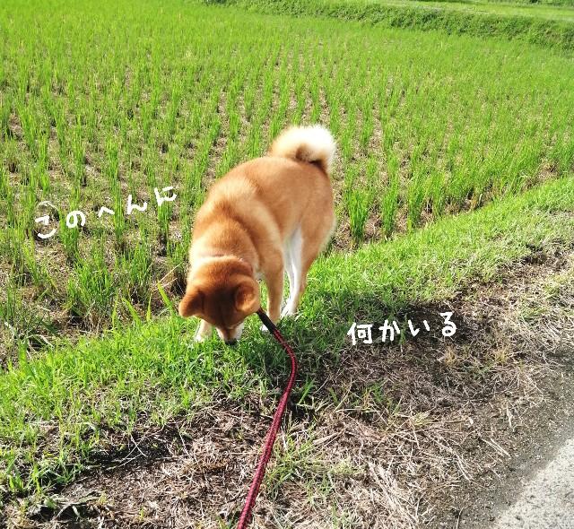 f:id:shibainumugi:20190923110309j:image