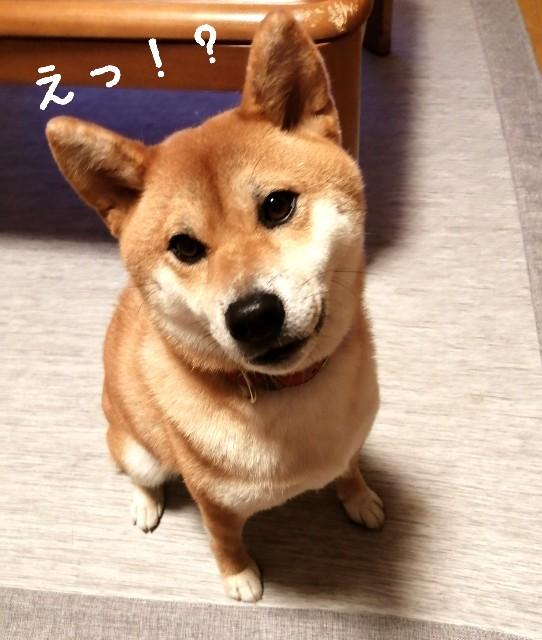 f:id:shibainumugi:20190928184215j:image