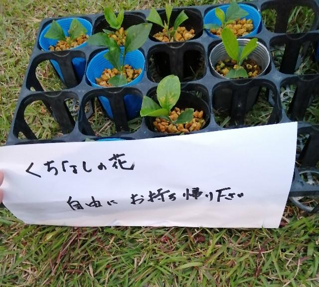 f:id:shibainumugi:20191020203232j:image