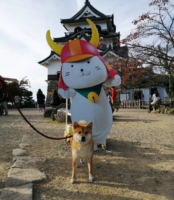 f:id:shibainumugi:20191112080344j:image