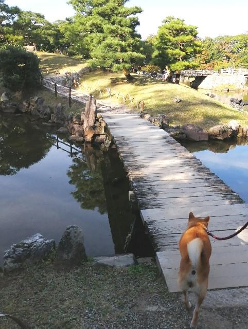 f:id:shibainumugi:20191112082429j:image