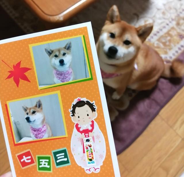 f:id:shibainumugi:20191119222324j:image