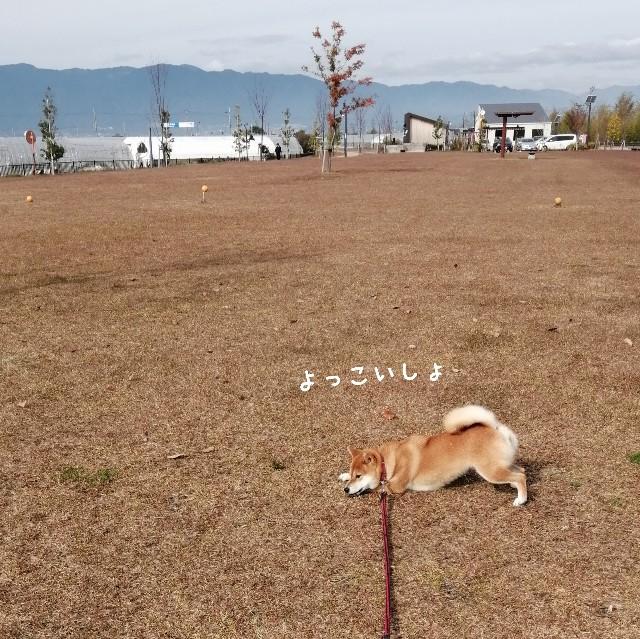 f:id:shibainumugi:20191124134810j:image