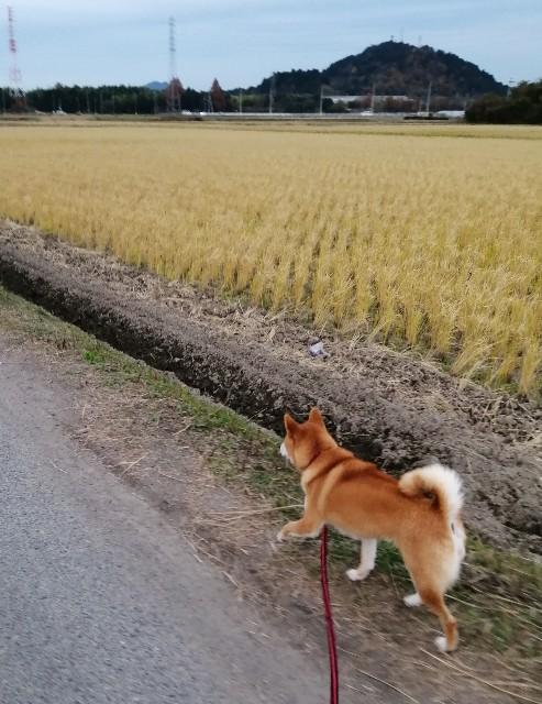 f:id:shibainumugi:20191207175753j:image