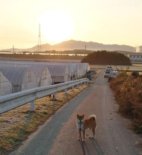 f:id:shibainumugi:20191214111557j:image