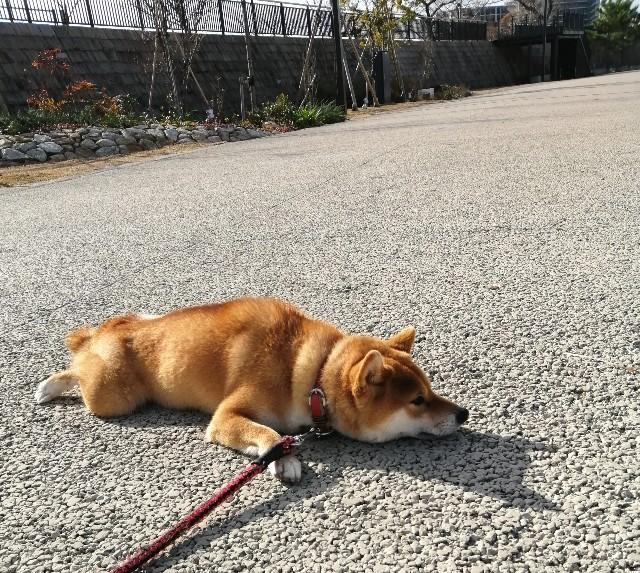 f:id:shibainumugi:20191230152219j:image