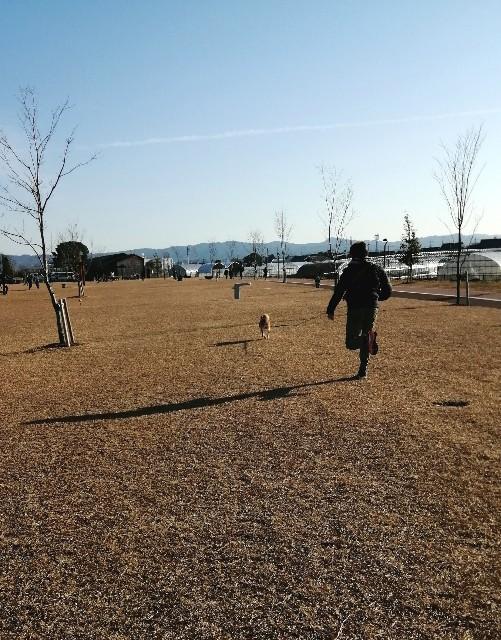 f:id:shibainumugi:20200112080937j:image