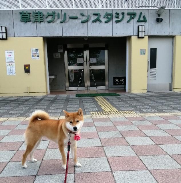 f:id:shibainumugi:20200118180606j:image