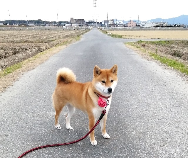f:id:shibainumugi:20200120194806j:image