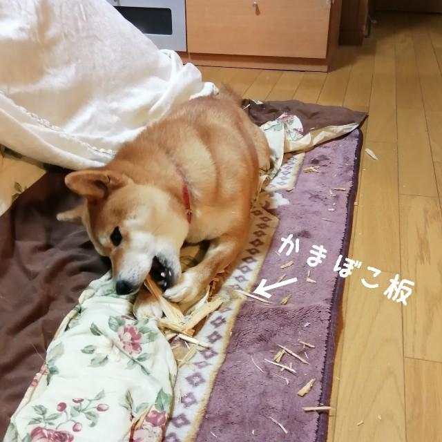 f:id:shibainumugi:20200120194820j:image