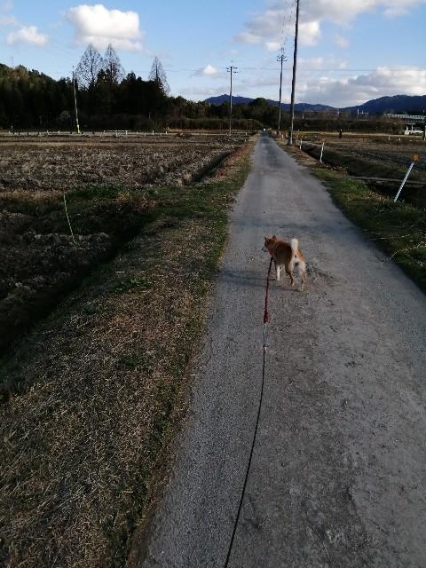 f:id:shibainumugi:20200202101737j:image