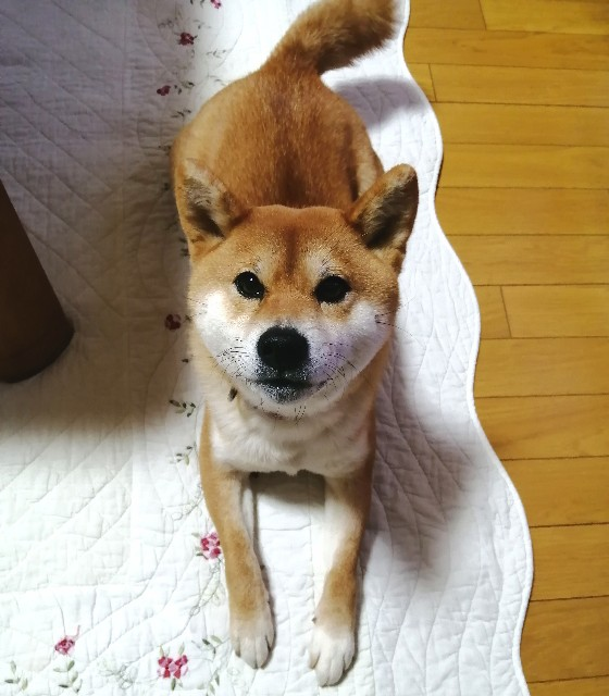 f:id:shibainumugi:20200208220219j:image
