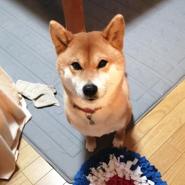 f:id:shibainumugi:20200302075225j:image