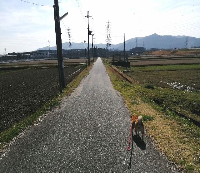 f:id:shibainumugi:20200307113344j:image