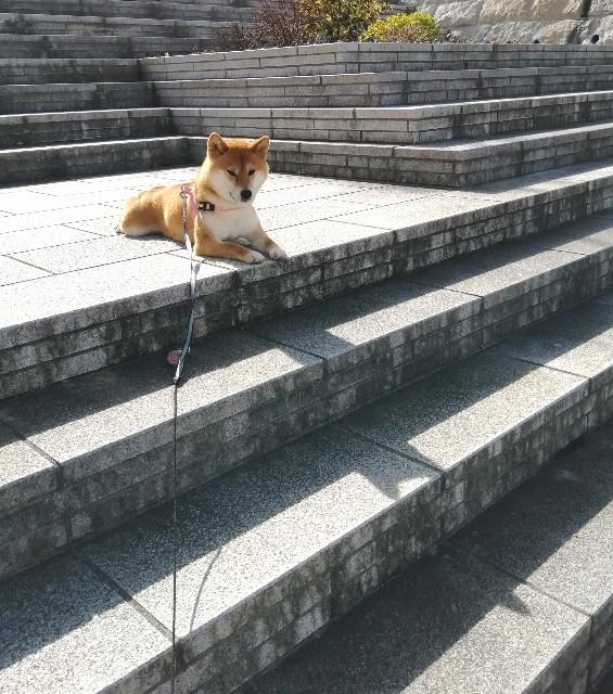 f:id:shibainumugi:20200309185814j:image