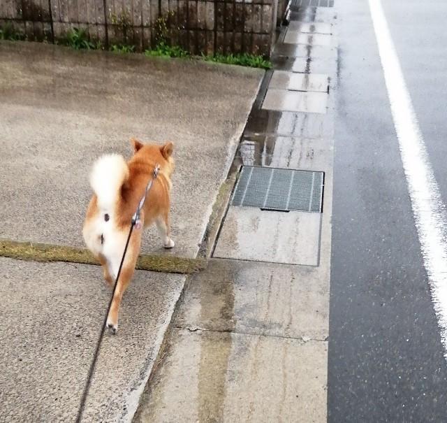 f:id:shibainumugi:20200327225601j:image