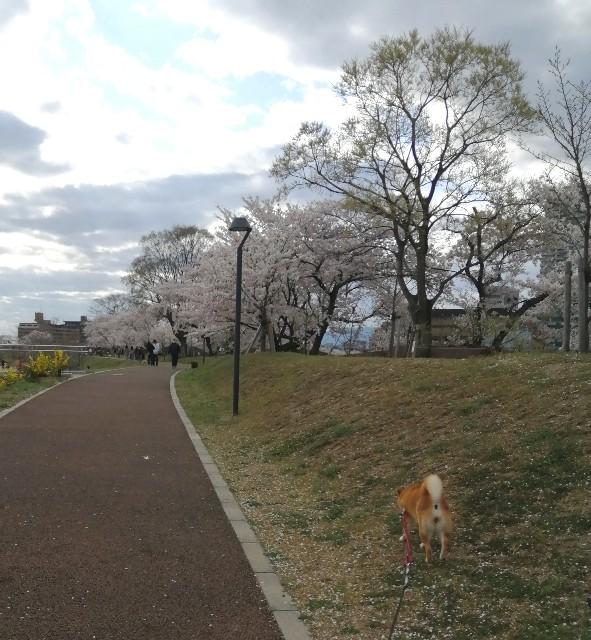 f:id:shibainumugi:20200406180155j:image