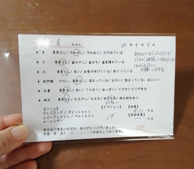f:id:shibainumugi:20200410064723j:image