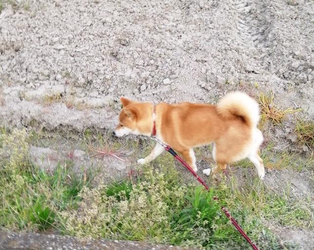 f:id:shibainumugi:20200411201441j:image